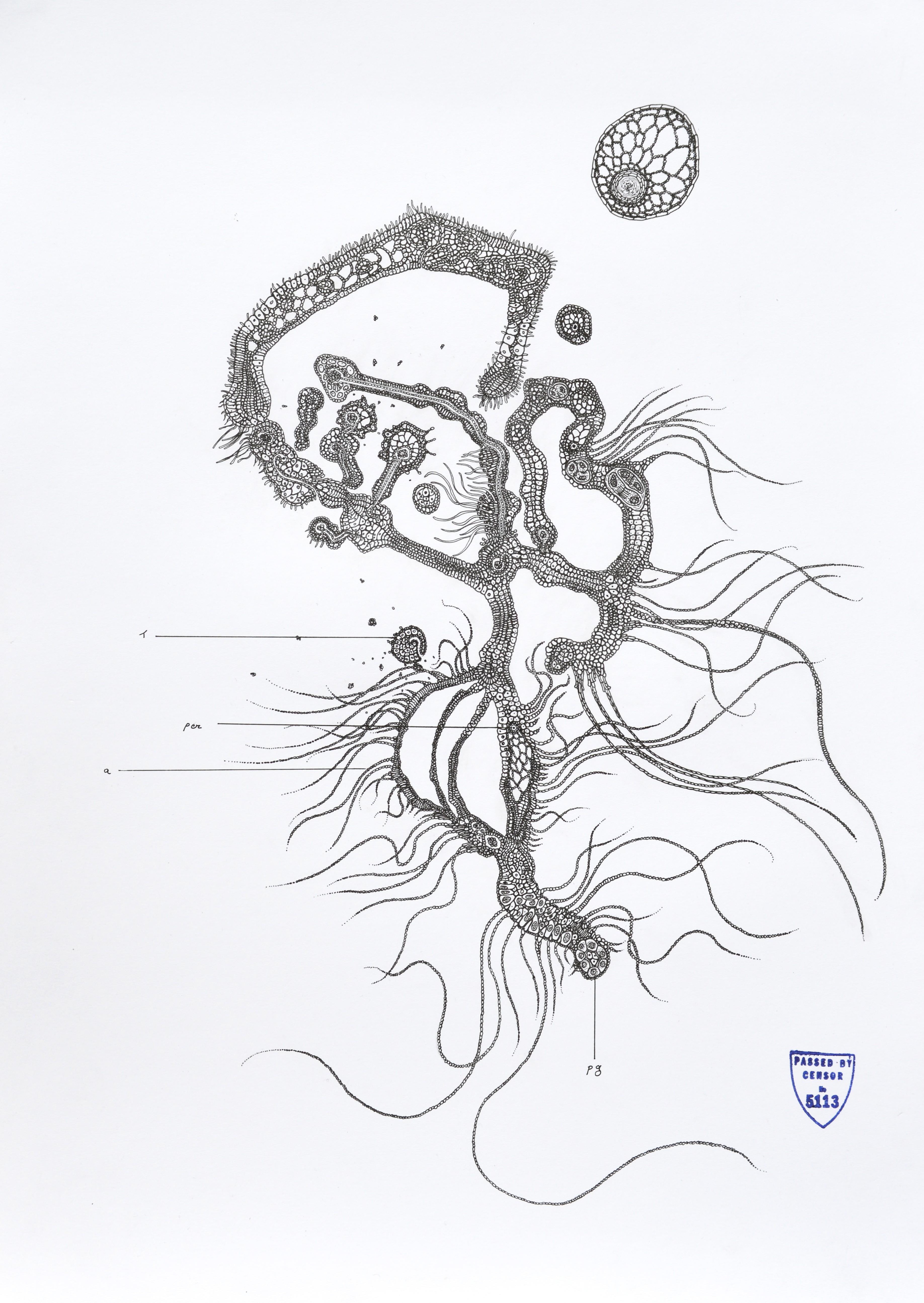 Parasitology 4